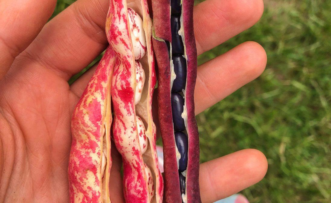 Southall field peas